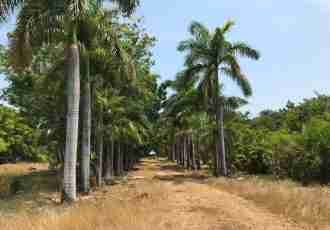 Development Land Santa Cruz for sale in Guanacaste Costa Rica Sun Real Estate