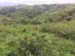 Mountain Land Miravalles Guayabo Guanacaste Costa Rica Sun Real Estate