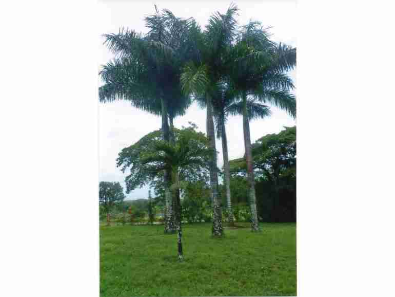 Caño Negro large property with Home for sale Sun Costa Rica Real Estate
