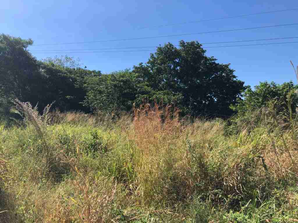 Large property in Bagaces for sale in Guanacaste Sun Costa Rica Real Estate