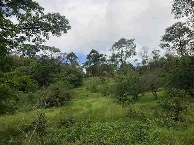 Rincon de la Vieja natural paradise mountain farm Sun Costa Rica Real Estate